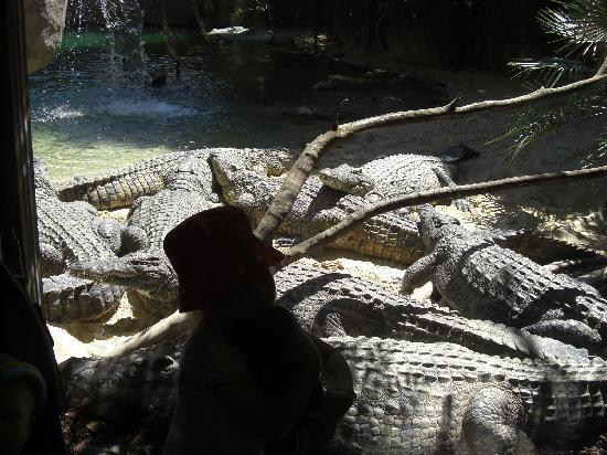 Bioparc Fuengirola: Crocodiles