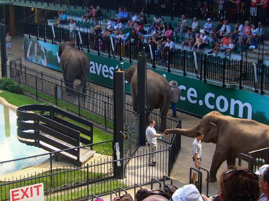 Australia Zoo : The 3 girls.