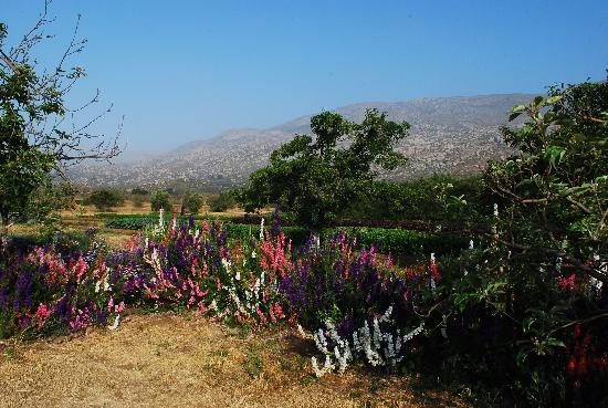 Tecate, Mexico: A paradise at the organic garden