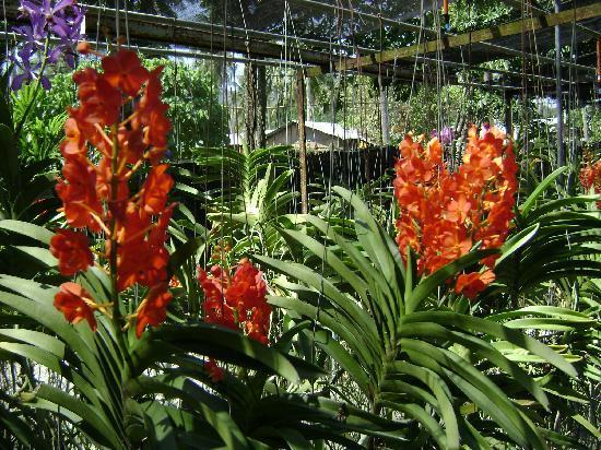 Inn Patong Beach Hotel Phuket: Ausflug Orchidenfarm