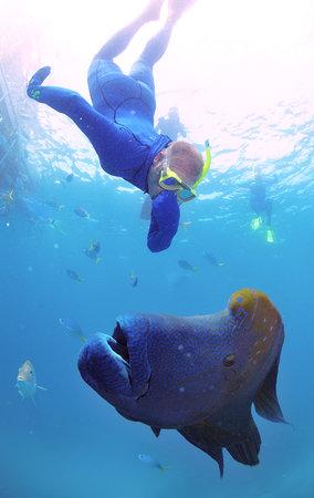 Tour sottomarini