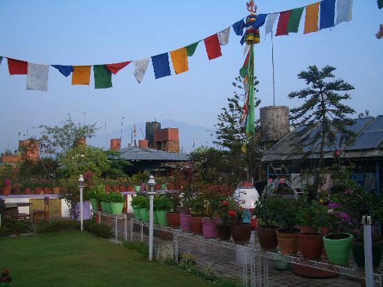 Hotel Utse : Roof top garden