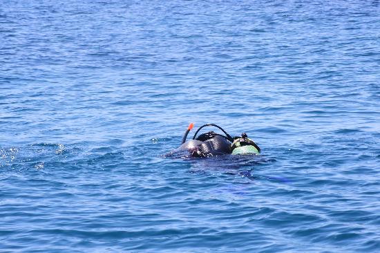 AegeanScuba: Off we go!