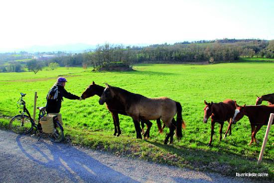 Burricleta S.L : Rural surrounding