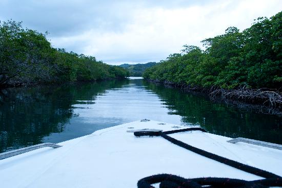 Roatán, Honduras: Mangroves, Roatan