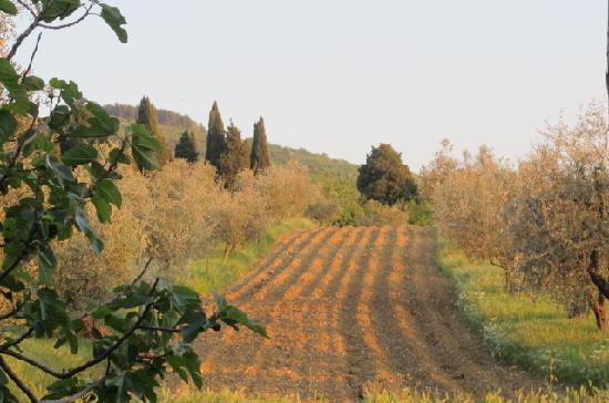 Agriturismo Poggio al Sole: fields of farm