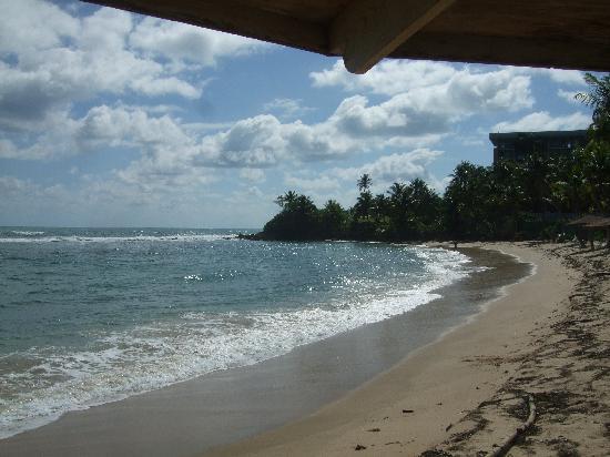 Hyatt Hacienda Del Mar: A view from my umbrella on the beach!