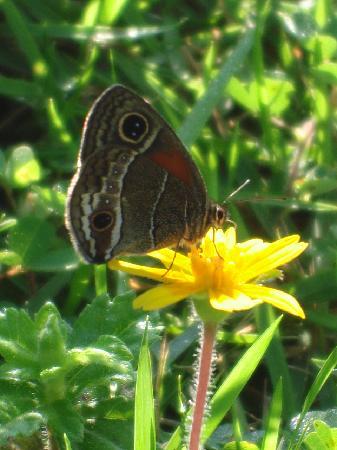 Enjoy nature at Jasmine Spa and Wellness