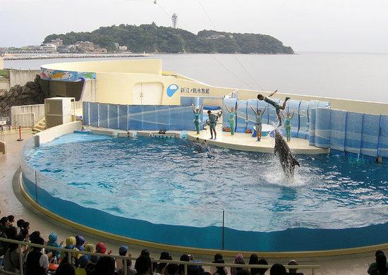 Enoshima Aquarium: イルカ・アシカショー