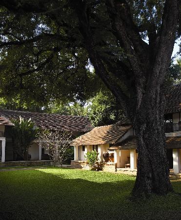Tamarind Village : 200 year old Tamarind tree