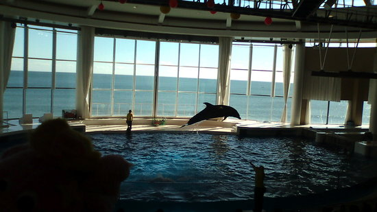 Oarai-machi, Japón: 勢いあるイルカのショー