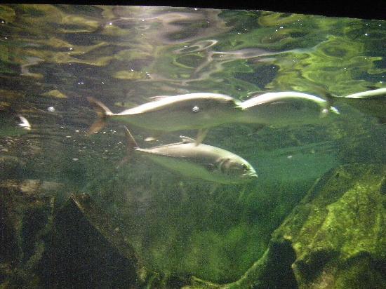 鳥羽水族館の写真その1 - Picture of Toba Aquarium, Toba - TripAdvisor
