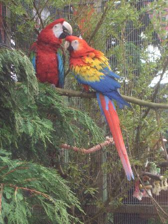 The Island Parrot Sanctuary: Two residents chilling out