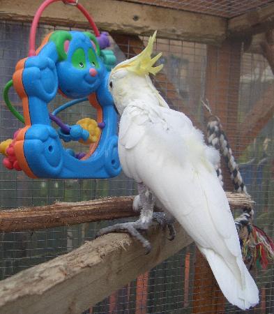 The Island Parrot Sanctuary: Cockatoo