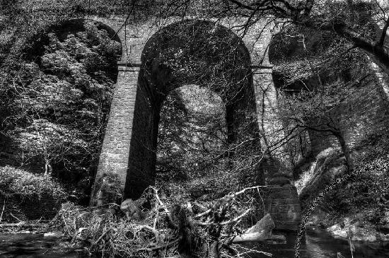 Gorey, Ireland: Dramatic view of Ballinatray Bridge from Courtown Woods