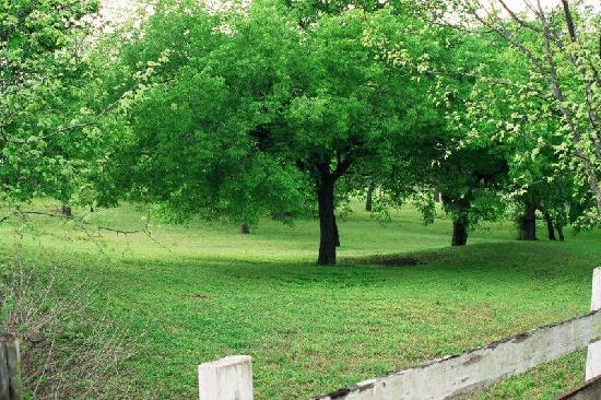 Fredericksburg, TX: Field by Our B&B