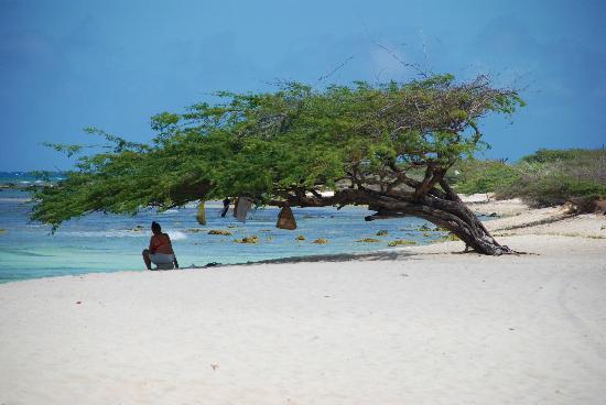 Bucuti & Tara Beach Resort Aruba : Arashi beach