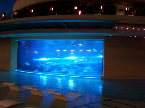 Golden Nugget Hotel: Shark Tank