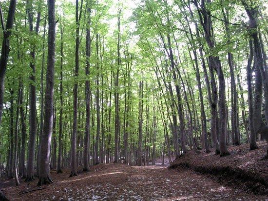 Tokamachi, Japonya: どこまでも歩いて行きたくなるブナ林