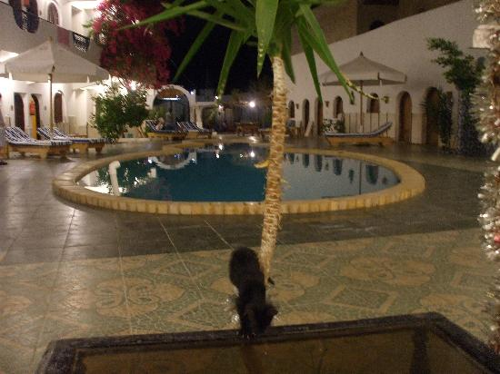 Dahab Plaza Hotel: lovely new pool..