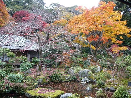 อิวาคุระ จิซโซอิน: 中庭 紅葉はちょっと終わりかけ