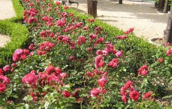 malaga rose garden tripadvisor. Black Bedroom Furniture Sets. Home Design Ideas