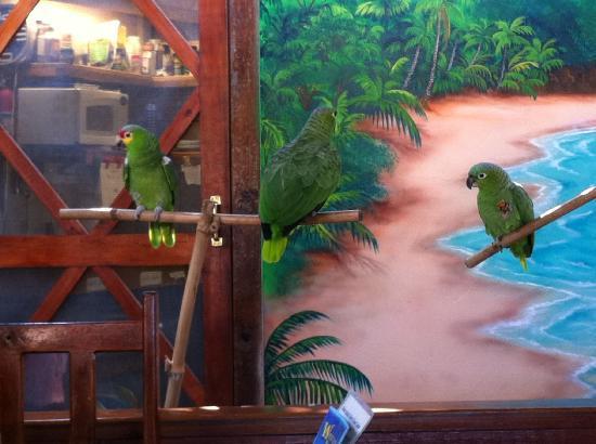 ويست باي لودج: The parrots serenaded us in the morning...