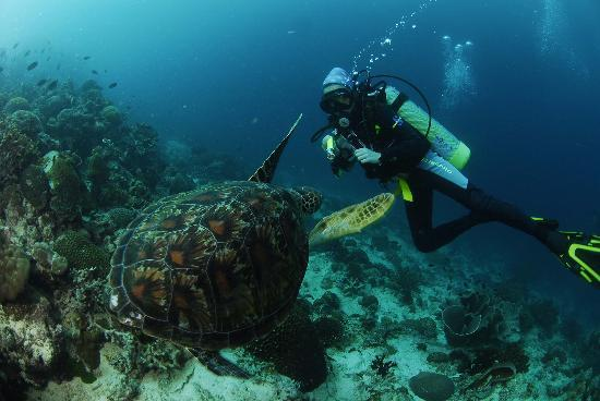 Badian Island, Filipinas: Experience diving like no other