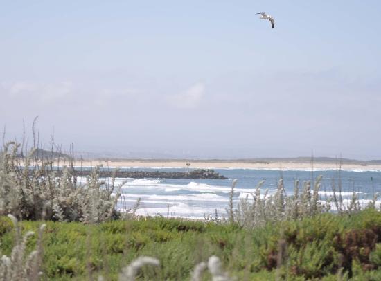 Moss Landing, CA: Beach behind Moss Land pier