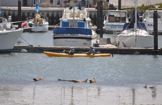 Kayaking around Moss Landing pier