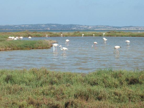 Belambra Clubs - Les Ayguades : L'étang entre Bages et Peyriac de Mer