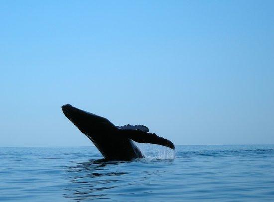 Samara Adventure Company: Dolphin & Snorkel Tour