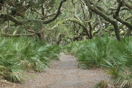 จอร์เจีย: Cumberland Island National Seashore, taken by the National Park Service