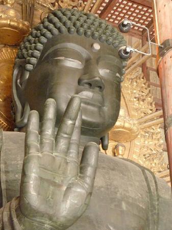 จังหวัดนาระ, ญี่ปุ่น: Nara 5