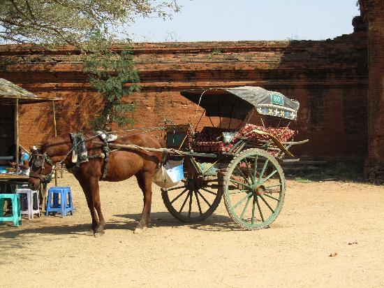 พม่า: horse carts for hire to take around to the temple