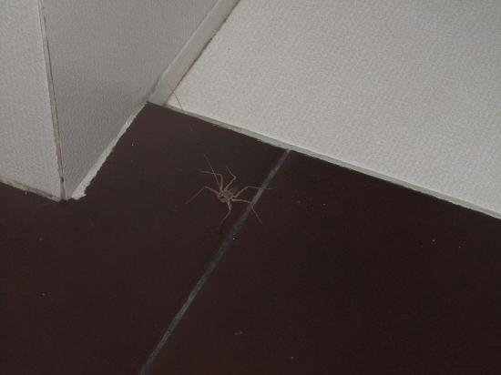 Our other guest. A little closer...