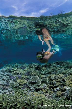 Walindi Plantation Resort: Incredible snorkelling