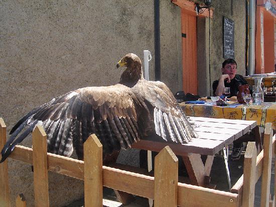 La Cotte de Mailles: Un aigle en terrasse