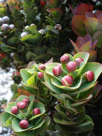 Mount Kinabalu: Wild plant along the trek