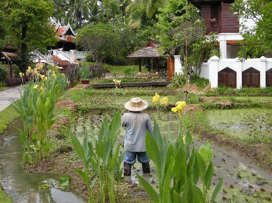 The Dhara Dhevi Chiang Mai : Garten