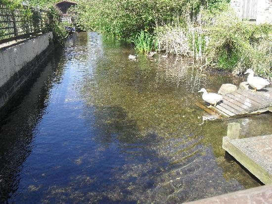Fingle Bridge Bed and Breakfast: Liz and Colin's duck stream from the terrace