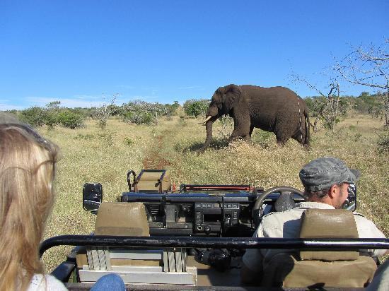 Bayete Zulu Boutique Lodge: Bayete Game Drive