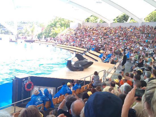 Loro Parque: orcas are amazing