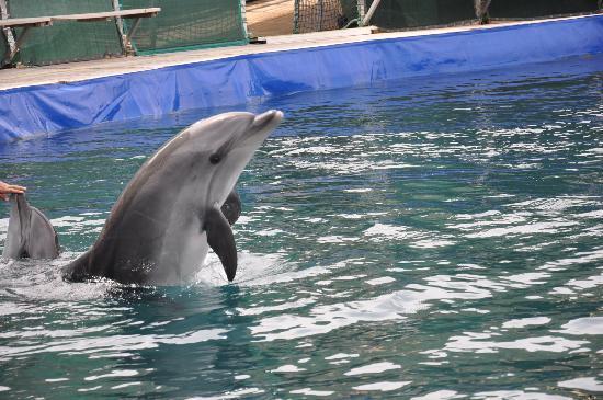 Labranda Mares Marmaris: Dolphin Park