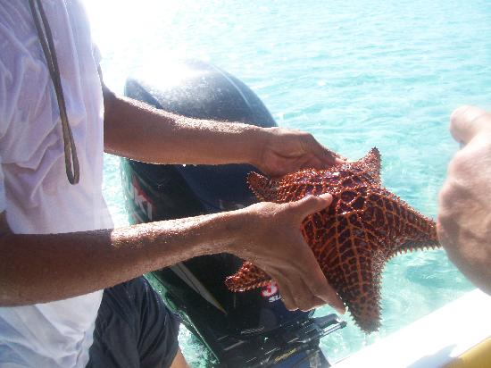 Great Exuma: Large starfish