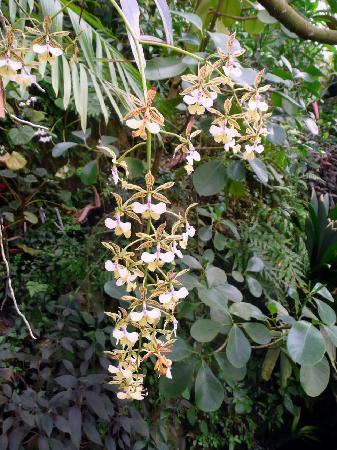 Prague Botanical Garden: Orchidee