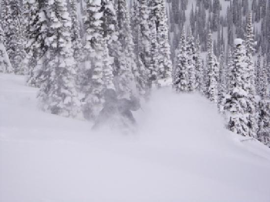 Great Northern Snowcat Skiing: unbelievable snow: up to your waist