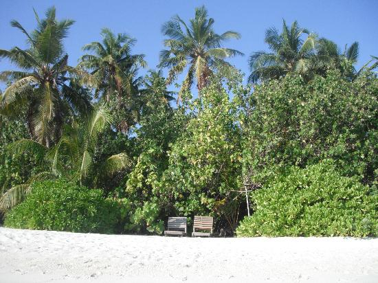 ‪‪Makunudu Island‬: The bungalows are hidden from view‬