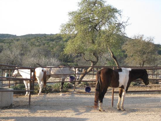 Rancho Cortez: horse stables