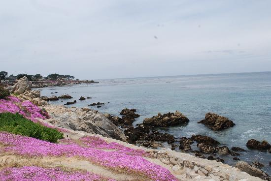 Pacific Grove, CA: gorgeous scenery
